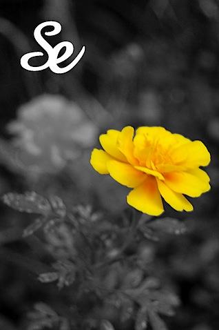 黄色のコピー.jpg
