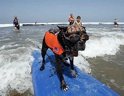 Dogs Hit the California Surf2.jpg