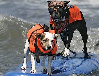 Dogs Hit the California Surf3.jpg