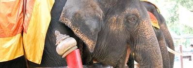 elefant.psd